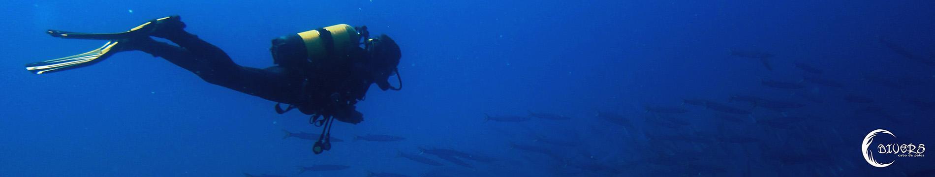 Buceando con Barracudas en el Piles 1