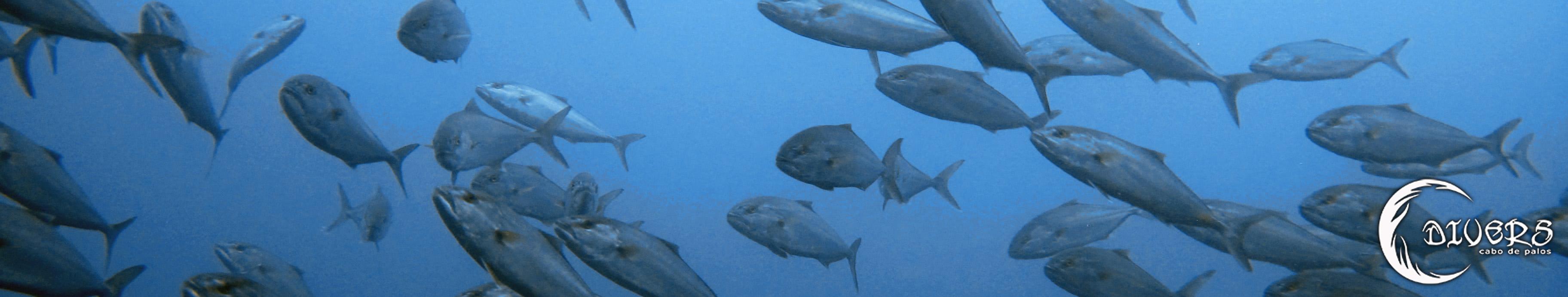 Lechas en el Azul con Divers Cabo de Palos